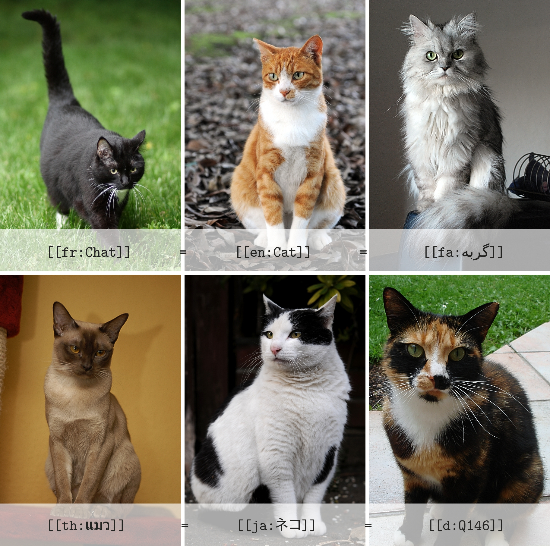 Collage_of_Six_Cats-_Interwikis